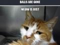 1st world cat problems