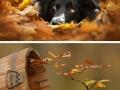 Animals enjoying autumn