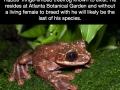 Loneliest frog