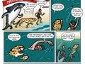 Shark vs cheetah vs man