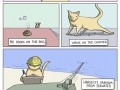 Cats never follow rules
