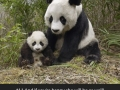 Animals with their moms