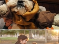 Pets in Star Wars clothing