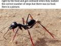 Stilts for ants
