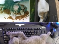 Cats master art of sleep-fu