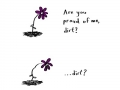 Why flowers face the sun