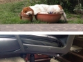 Dogs can sleep anywhere