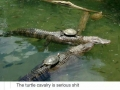 Turtles are serious s**t