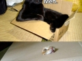 Just cats and boxes