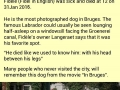 Fid�le the dog of Bruges
