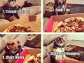 Isn't this just every dog?