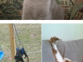 Pets stuck in things