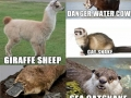 If I had to name animals