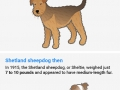 Dog breeds 100 years later