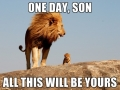The Lion King on BBC wildlife