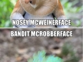 Hilariously accurate animal names