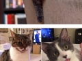 Cats with their tongues out