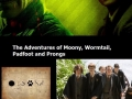 Harry Potter tv series