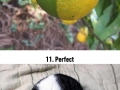 Oddly satisfying photos that�ll soothe every perfectionist�s soul