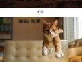 Purrfectly-timed cat photos