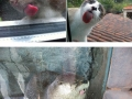 Animals and windows is a hilarious combination