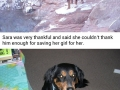 Stranger saves dog from drowning