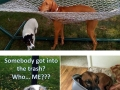 Pets that got themselves hilariously trapped