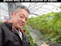 Japan's premium white strawberry