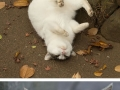The many faces of Tokyo�s stray cats
