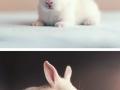 Baby photoshoot of a newborn bunny