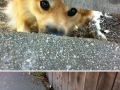 Dogs who just want to say hi