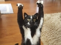 Cat keeps putting its paws in the air