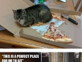 Funny examples of cat logic