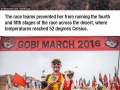 Runner adopts stray dog who ran 125km with him