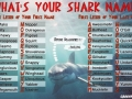 What's your shark name?