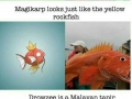 Real animals that inspired pokemon