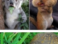 Animals that really don�t care about diets