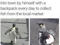 Best penguin ever