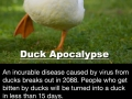 The Duck Apocalypse