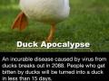 The Duck Apocalypse