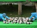 Baby panda face-plants and tumbles