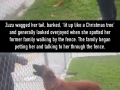 Dog was left at a shelter