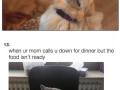 Animal memes that'll make you laugh