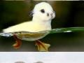 Majestic animal photoshopping