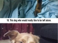 Dogs who really regret eating a bee