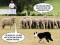 Sheep Dog Conspiracy