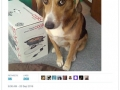 The best dog tweets of 2016