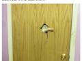 Open diz door hooman!