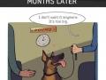 Beautiful story of a dog