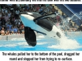 Killer whale Tilikum from 'Blackfish' dead at 36